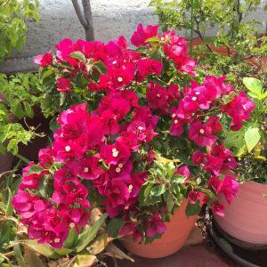 casa_xola_garden01